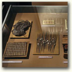 Display cases - Archeological Museum in Krakow